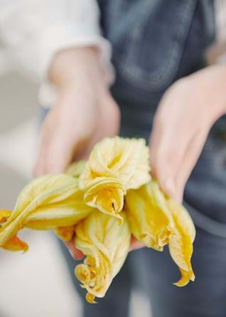 Courgette flowers in hand