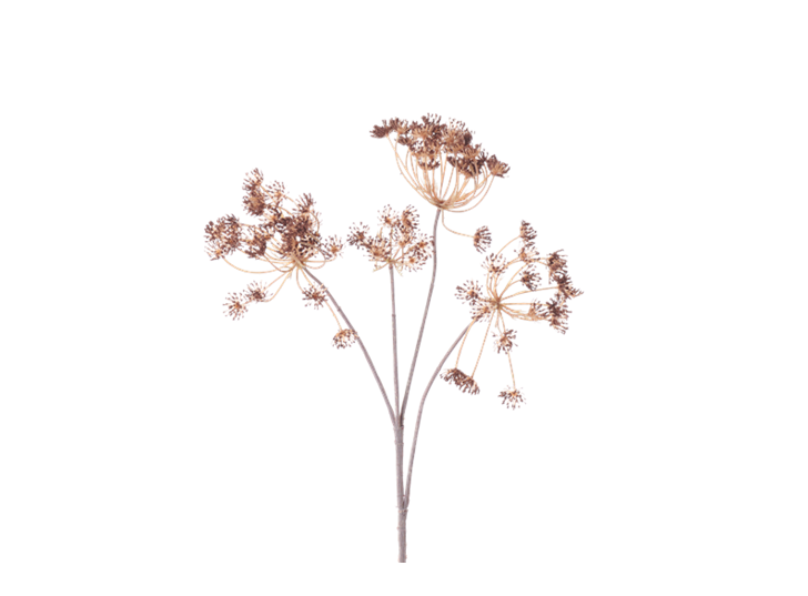 Queen Anne's Lace Stem_Russet_Square