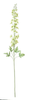 Delphinium Stem, Green