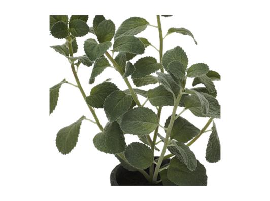 Mint Plant Textured_Detail