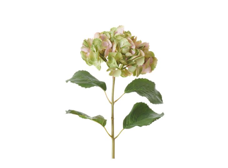 Hydrangea Stem_Soft Pink_Square
