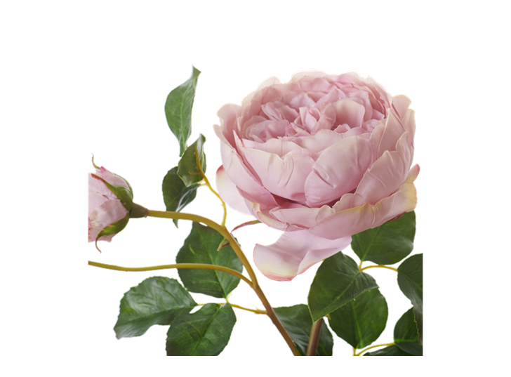 English Rose Short Stem_Dusky Pink_Detail