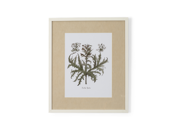 Clipsham Botanical Art - 5 - front