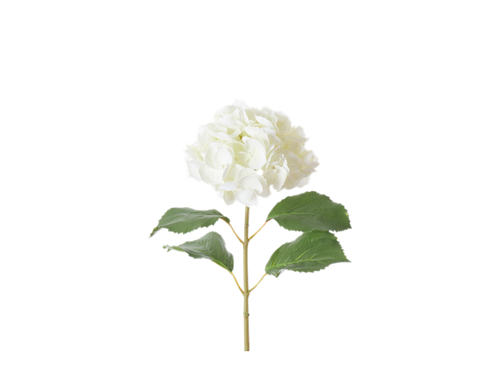 Hydrangea Stem_White_Square