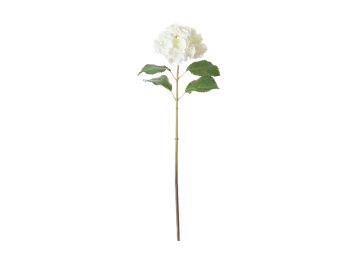 Hydrangea Stem_White_Front