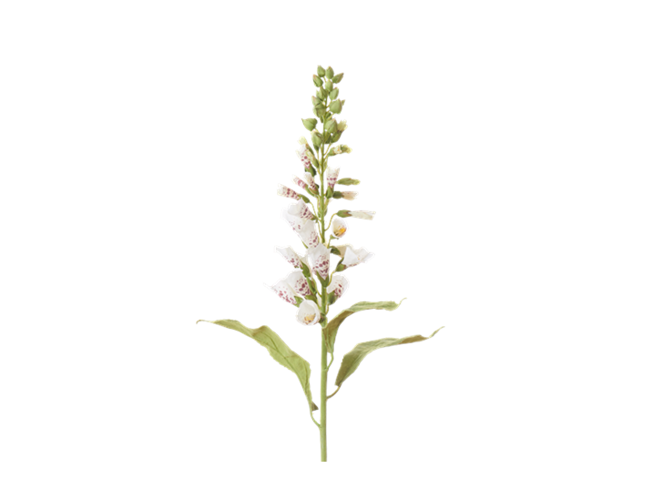 Foxglove Stem_White_Square