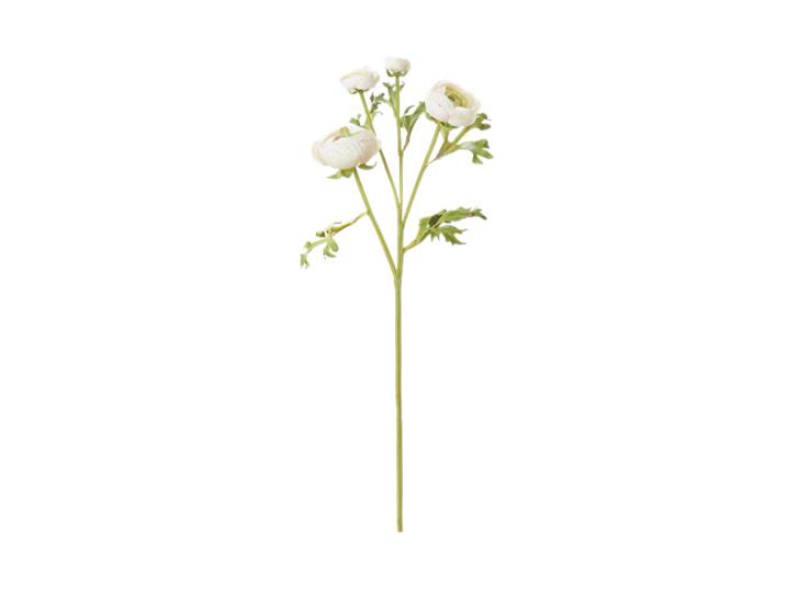 Ranuncula_White_Front