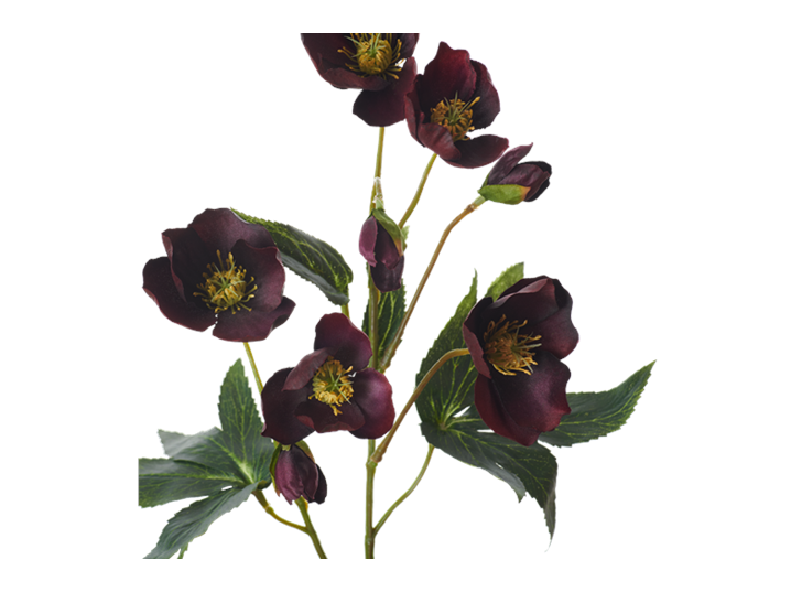 Hellebores Spray_Burgundy_Detail