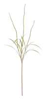 Sea Arrowgrass Stem, Green