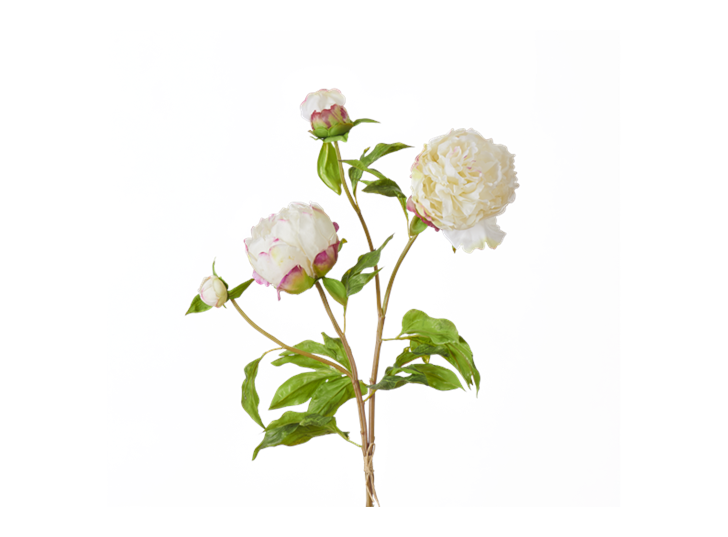 Peony Bundle_Petal Feel White_Square