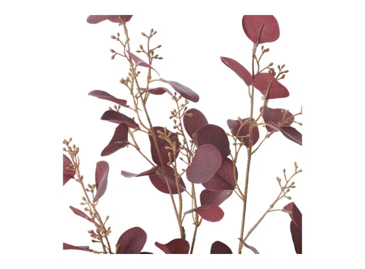 Eucalyptus Stem_Burgundy_Detail