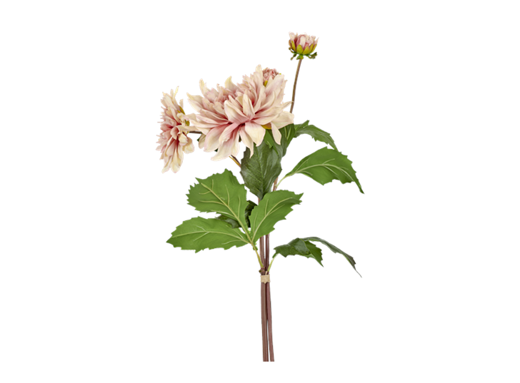 Dahlia bundle soft pink_detail