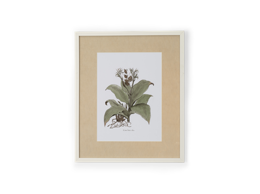 Clipsham Botanical Art - 7 - front