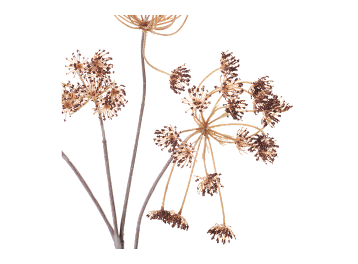 Queen Anne's Lace Stem_Russet_Detail