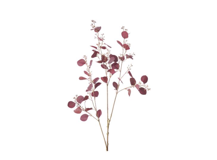 Eucalyptus Stem_Burgundy_Square