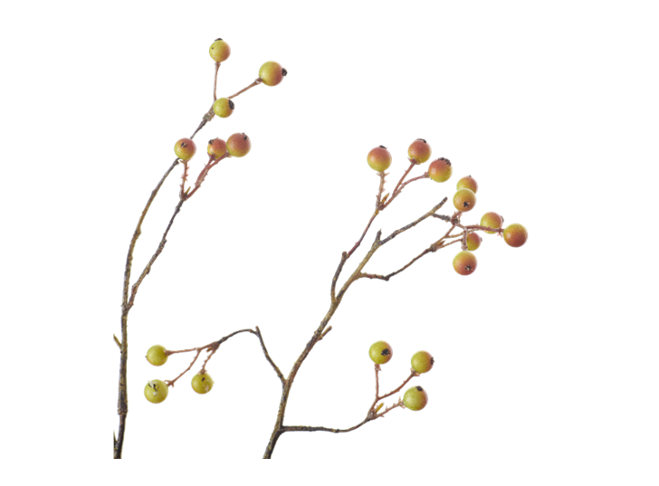 Snowberry Twig_Russet_Detail