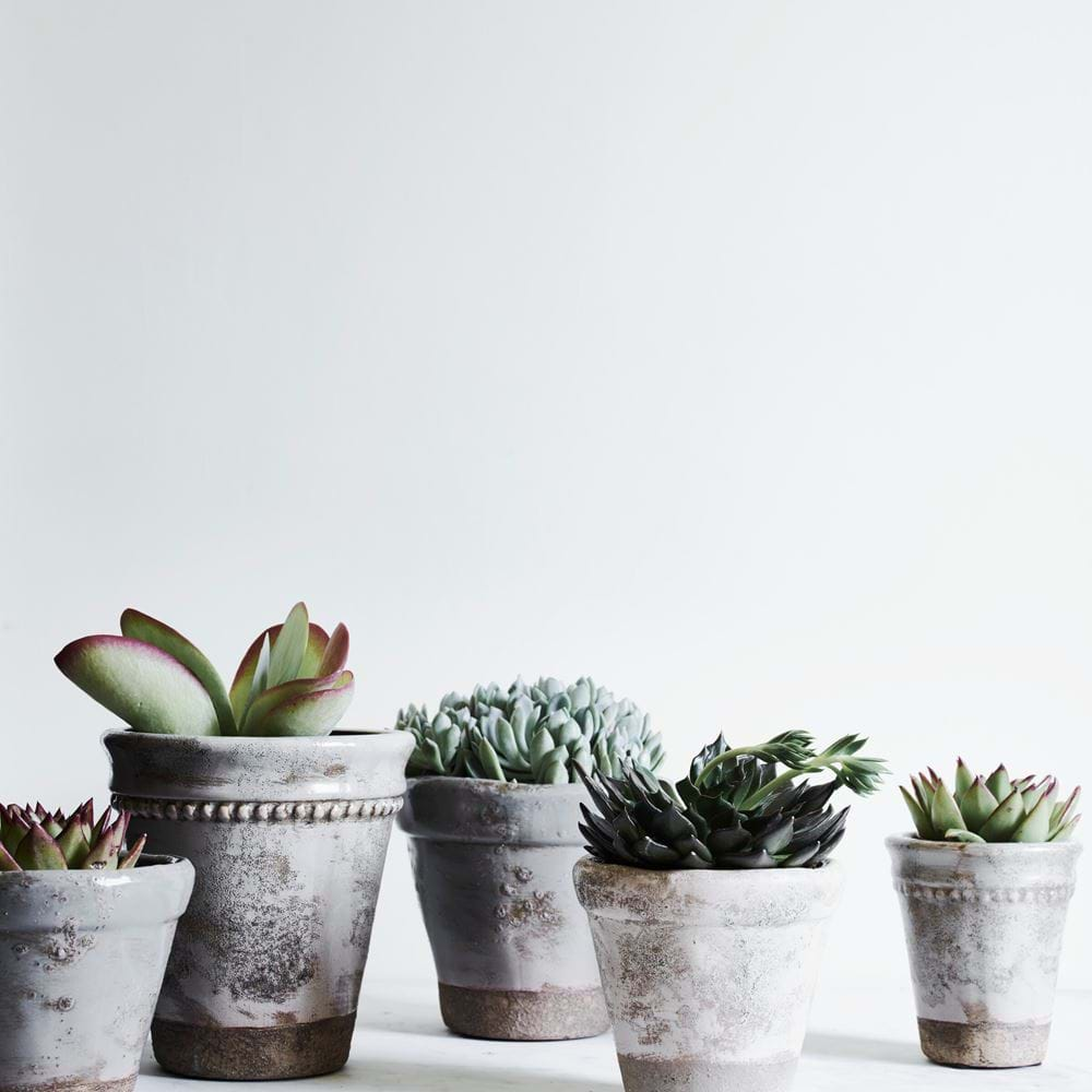 Plant Pots with Succulents