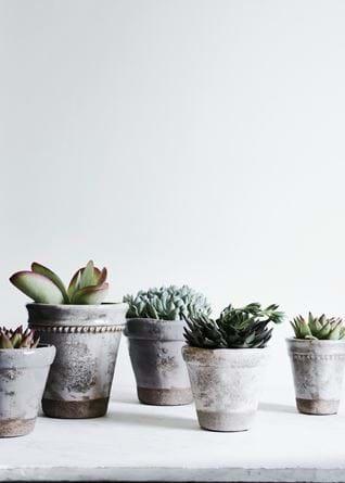 PLANT POTS_005