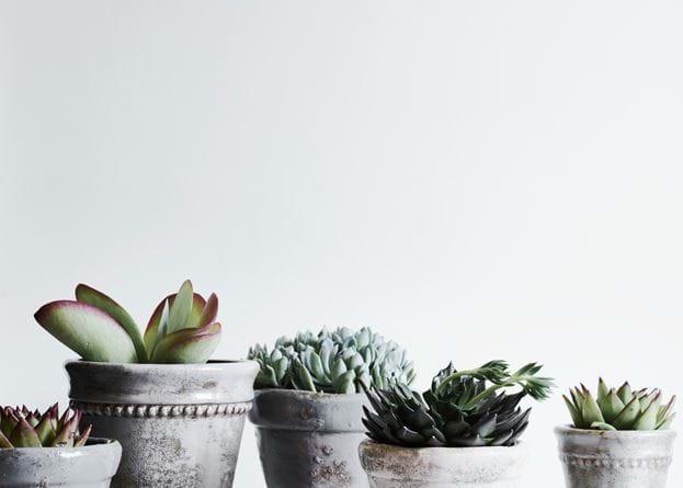 Potted Succulents Sage Pot