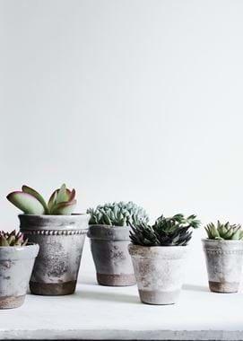 Plant Pots with Succulents