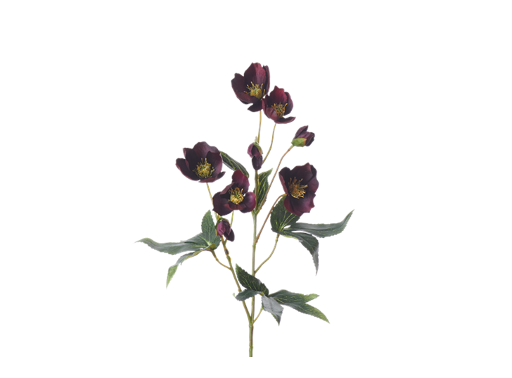 Hellebores Spray_Burgundy_Square