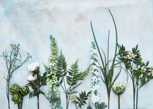 Agapanthus Stem - White