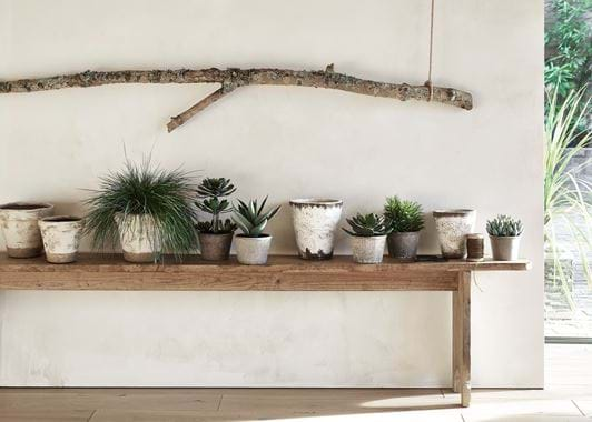Plant Pot Selection with Thyme Pots