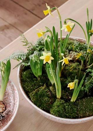 Olney Decorative Bowls_Spring Bulbs