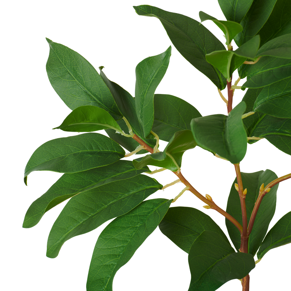 Laurel Leaf_Detail