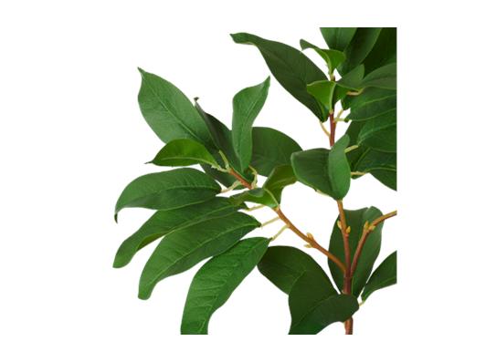 Laurel Leaf_Detail