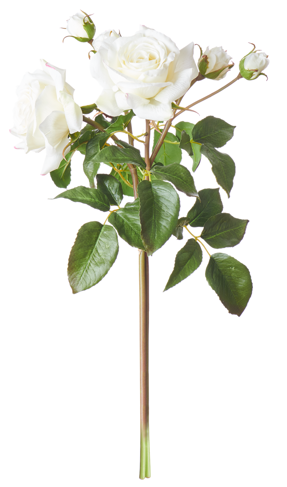 English Rose Bundle White_Front