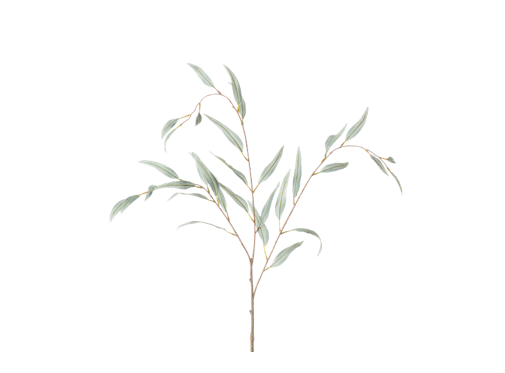 Olive Branch_Green_Square