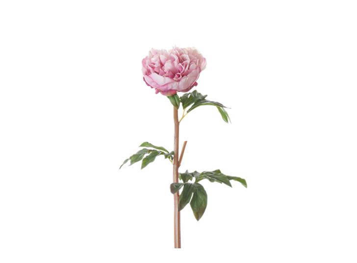 Peony Stem_Pink_Square