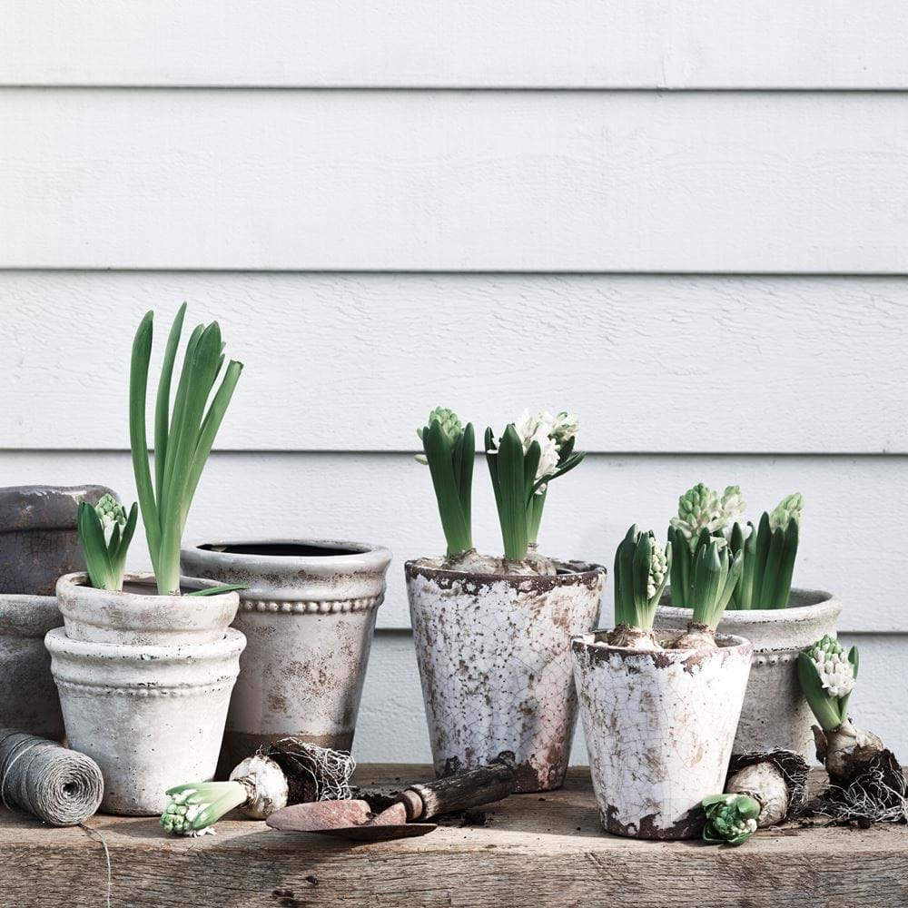 Plant Pot Selection with Bay Pots