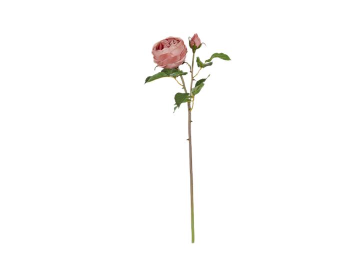 English rose warm pink_front
