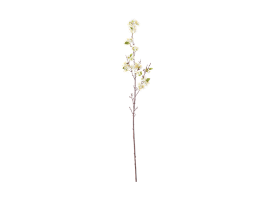 Apple Blossom_White_Front