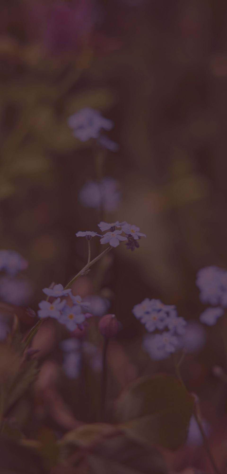 Large-Jane Cumberbatch garden - 21-05-2021 13 Clove Overlay