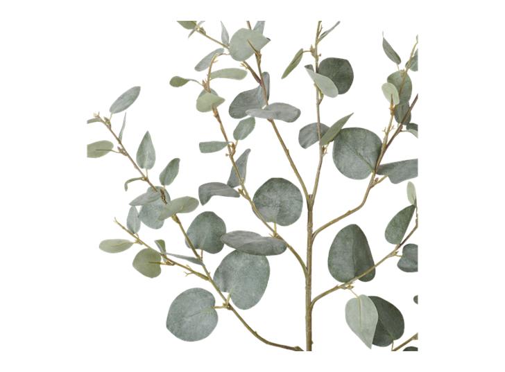 Eucalyptus Greenspray Green_Detail