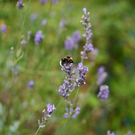 bees_1