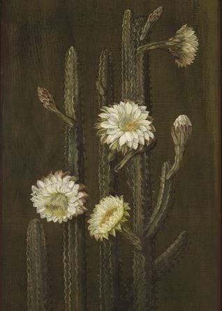 836. A Brazilian Columnar Cactus .