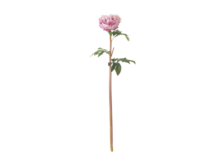 Peony Stem_Pink_Front