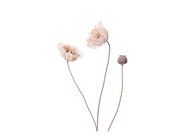 Poppy Stem_Dusky Pink_Square