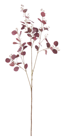 Eucalyptus Stem_Burgundy_Front