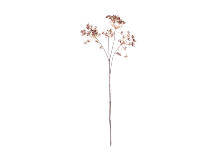 Queen Anne's Lace Stem_Russet_Front