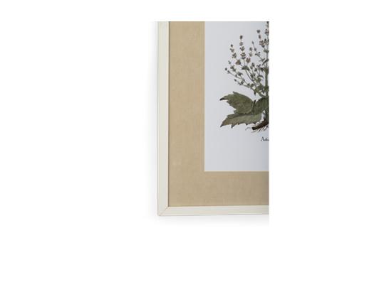 Clipsham Botanical Art - 8 - detail