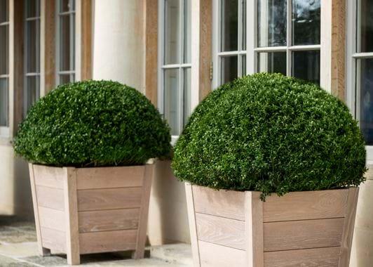 Bibury Oak Planter Medium