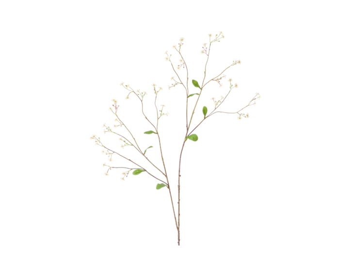 Gypsophila Twig_White_Square