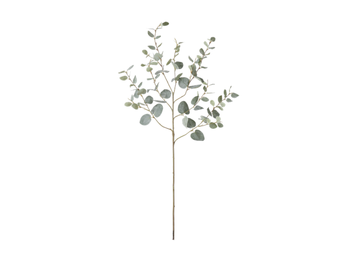 Eucalyptus Greenspray Green_Front