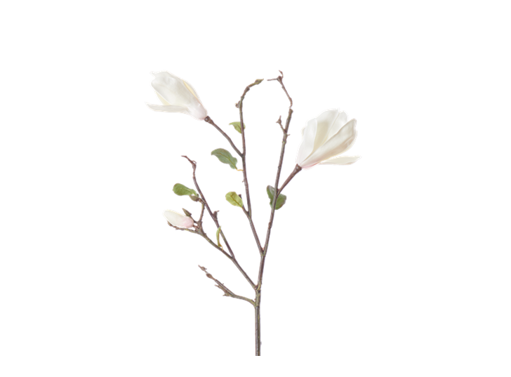 Magnolia Branch_White_Square