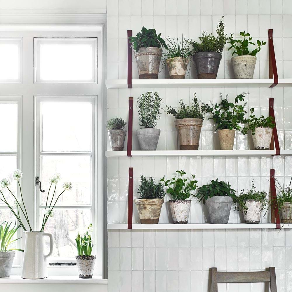 Tiled Herb Wall Shelf Display